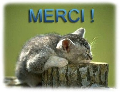 Merci chat